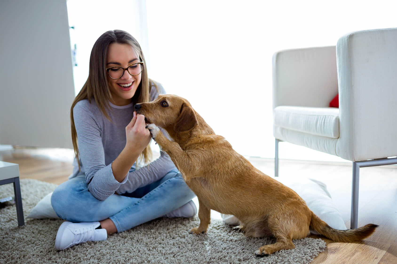 Why hire a professional pet sitter contented creatures for Babysitter dog sitter