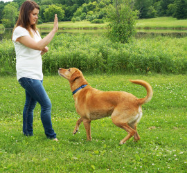 Best Dog Boarding Kennels Madison