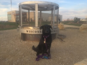 Madison, wisconsin, wisconsin brewing company, dog friendly, restaurants, patios, dog friendly patios