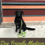 Dog Friendly Madison: Part Two