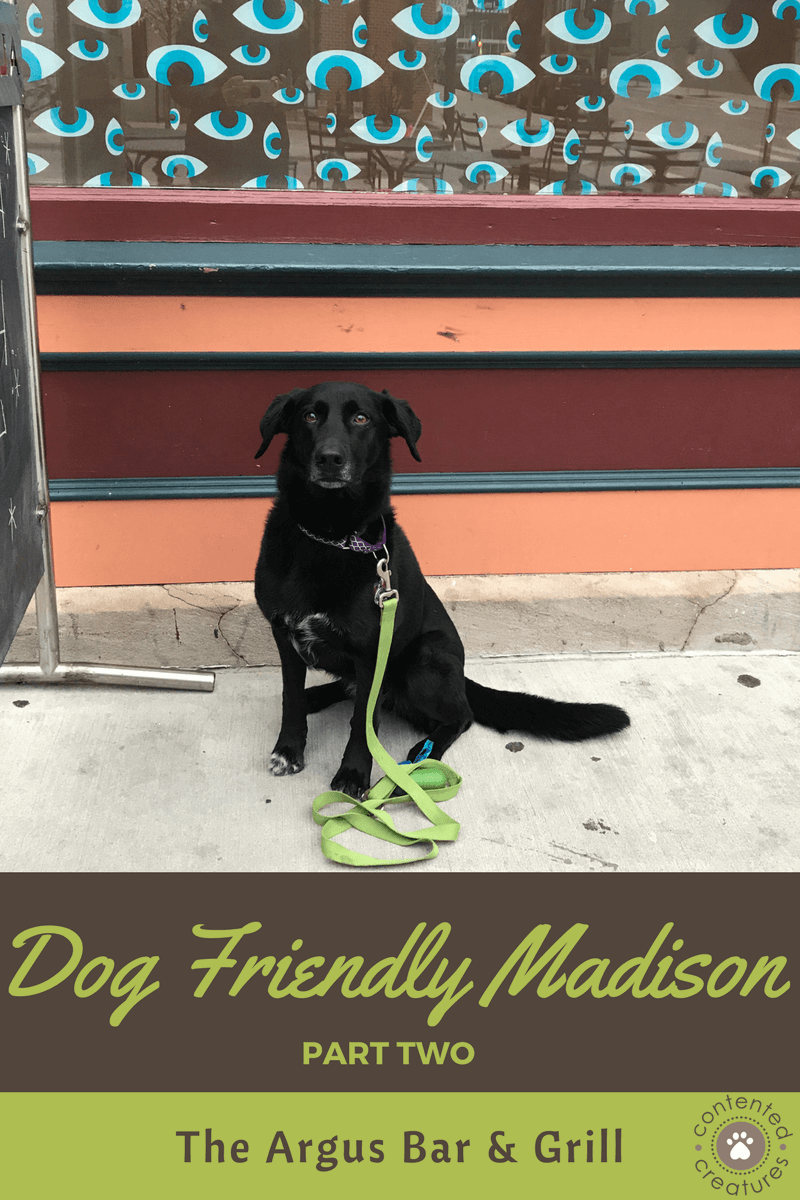 Madison Wisconsin Dog-Friendly Restaurants Patios bring my dog