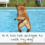 When Is It Too Hot To Walk A Dog?