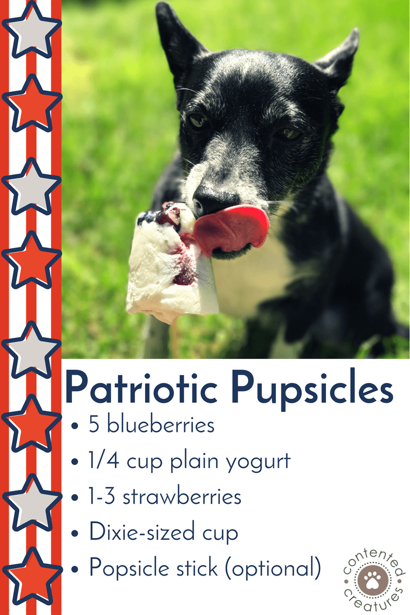 madison wi fourth of july dog treat healthy popsicle