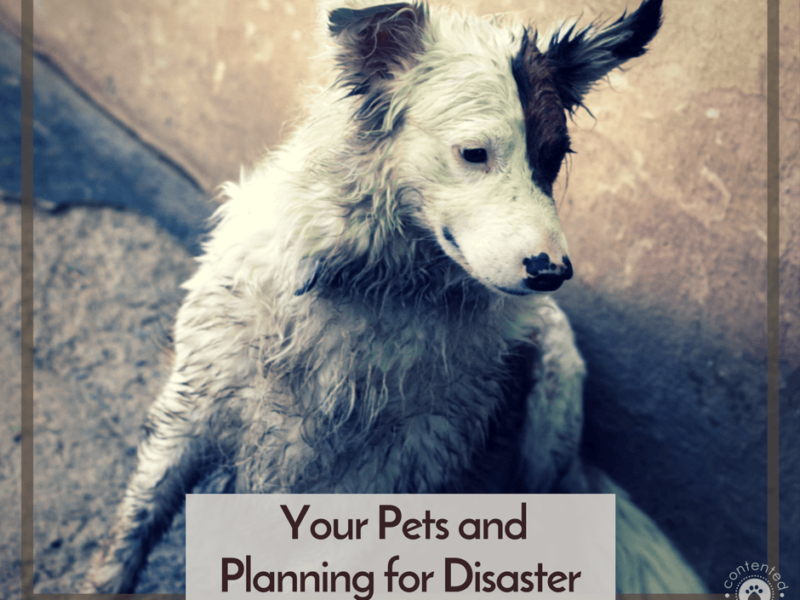 Your Pets & Planning For Disaster